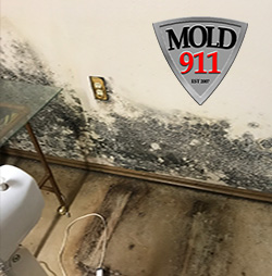 visible mold on walls