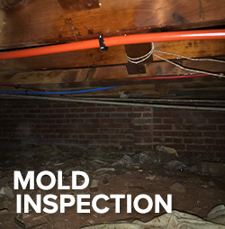 mold inspection in crawlspace