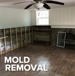 residentail mold removal