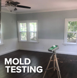 Home / Business Mold Testing
