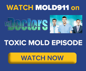 mold911 and the doctors talk about toxic mold